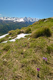 Spring in the Alps Stock Image