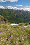 Spring in the Alps Royalty Free Stock Photos