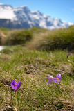 Spring in the Alps Royalty Free Stock Images