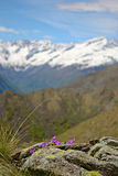 Spring in the Alps Stock Images
