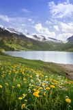 Spring in Alps, Switzerland Stock Images