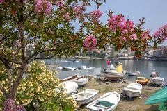 Spring in Amasra and Colorful New Blooming Flowers stock photography