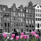 Spring in amsterdam Stock Image