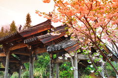 Spring in Anhui Royalty Free Stock Images