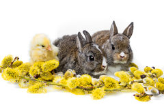 Spring animals Royalty Free Stock Image