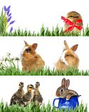 Spring animals and easter eggs. Spring animals in grass - spring banners Stock Photos
