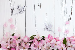 Spring apple blossom with pair birds on old vintage wooden background. Stock Photography