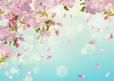 Spring Apple blossom Stock Photography