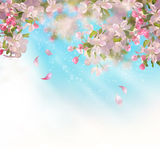 Spring Apple blossom. Vector background with spring Apple blossom. Blooming tree branch in springtime Stock Photography
