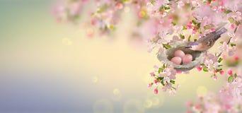 Spring Apple Blossom vector illustration