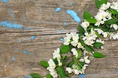 Spring apple branch over wooden Royalty Free Stock Image