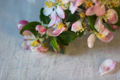 Spring apple flowers on a table Stock Image