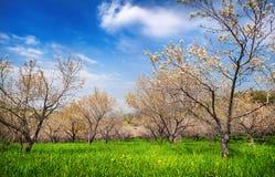 Spring Apple garden Royalty Free Stock Photography