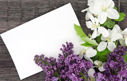 Spring apple tree blossom and lilac on rustic wooden background Royalty Free Stock Photography