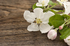 Spring apple tree blossom on rustic wooden background Stock Image