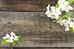 Spring apple tree blossom on rustic wooden background Royalty Free Stock Photos