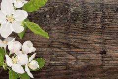 Spring apple tree blossom on rustic wooden background with space Royalty Free Stock Photos