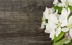 Spring apple tree blossom on rustic wooden background with space Royalty Free Stock Image
