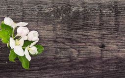 Spring apple tree blossom on rustic wooden background with space Stock Photo