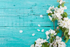 Spring apple tree blossom on turquoise rustic wooden background. With space for greeting message. Mother's Day and spring background concept. Top view Stock Photo