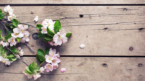 Spring apple tree flowers on  aged wooden background. Stock Images