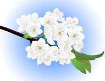Spring apple-tree twig Stock Photography