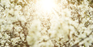 Spring apple trees and flowers in bright sunlight Stock Photography