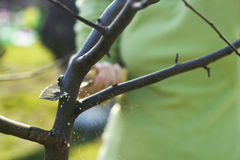 Spring apple trees pruning Stock Photos