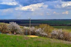Spring. April. Flowering trees in April.  Photo taken on: April 15 Saturday, 2017 Royalty Free Stock Image