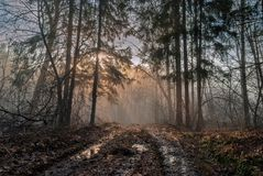 Beautiful April morning. Spring, April foggy morning in the woods Royalty Free Stock Photography