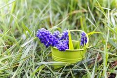 Spring April freshness Royalty Free Stock Images