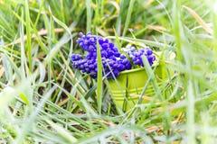 Spring April freshness Stock Images