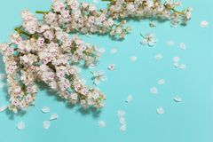 Mint horizontal background with spring chestnut flowers Royalty Free Stock Images