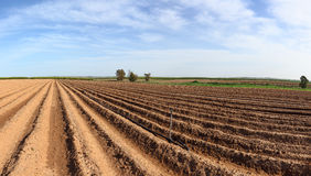 Spring arable land. With furrows aspiring to horizon Stock Images