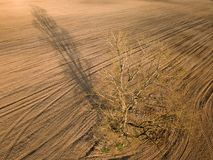 Spring arable land. A field and a lonely tree. View from above. Aerial, drone. A field and a lonely tree. Spring arable land.  View from above Royalty Free Stock Photo