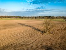 Spring arable land. A field and a lonely tree. View from above. Aerial, drone. A field and a lonely tree. Spring arable land.  View from above Stock Images