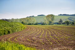 Spring arable land. Spring wavy agriculture scene. Rural landsca. Pe of South Moravia Royalty Free Stock Photo