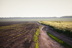 Spring arable wheat fields and country road. Sunny spring day. Ukraine Stock Images