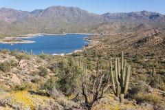 Spring in the Arizona Desert Stock Image