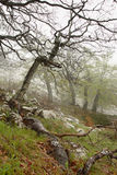 Spring in Armenia. Old trees royalty free stock photo