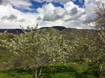 Spring in Armenia. Flowering trees in the background of mountain stock photos
