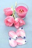 Spring aroma Stock Photos