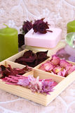Spring aromatherapy Royalty Free Stock Photos