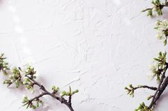 Spring arrangement of twigs with flowering on a white textural background. royalty free stock photos