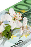 Spring arrives to markets too. Flowers of fruit trees placed on euro banknote Royalty Free Stock Images