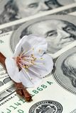 Spring arrives to markets too. Flowers of fruit trees placed on dollar banknote Royalty Free Stock Photography