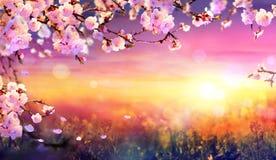 Spring Art Background - Pink Blossom. At Sunset Stock Image