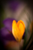 Spring art flowers Royalty Free Stock Image