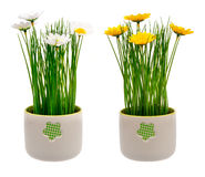 Spring artificia yellow and white l flower in decorative pot isolated. Spring artificia yellow and white l flower in decorative pot isolated on the white Royalty Free Stock Photography