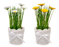 Spring artificial yellow and white l flower in decorative pot isolated. Spring artificial yellow and white l flower in decorative pot isolated on the white Royalty Free Stock Photo
